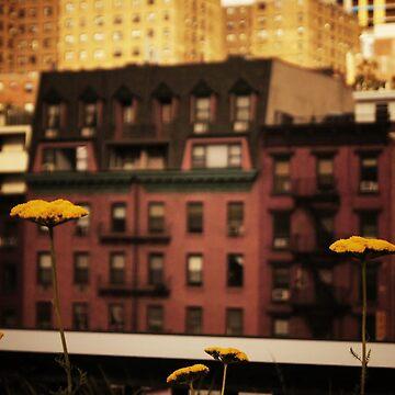 High Line Park Wild Flowers de vgucwaphoto