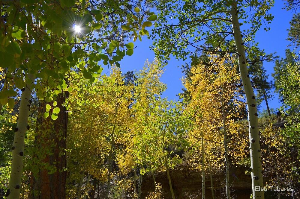 Autumn Colors by Eleu Tabares