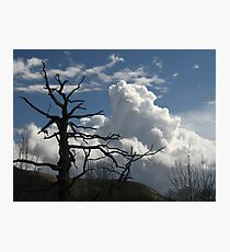 Dead tree and cumulus cloud Photographic Print