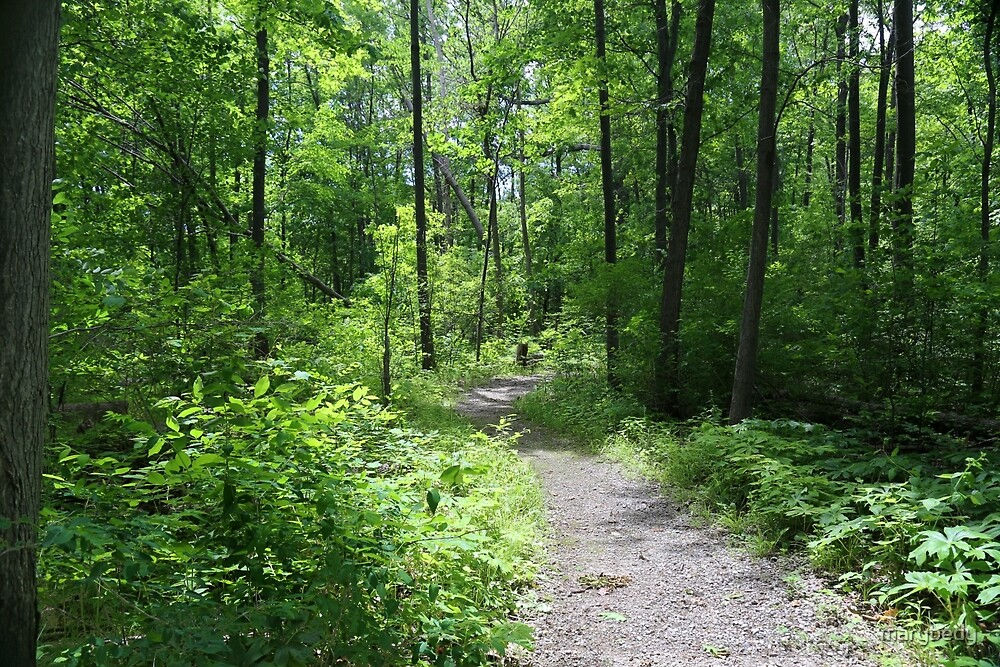 Forest Path 1 by marybedy
