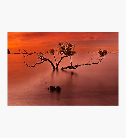 """""""Airlie Calm"""" Photographic Print"""