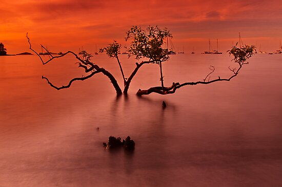 """""""Airlie Calm"""" by Phil Thomson IPA"""