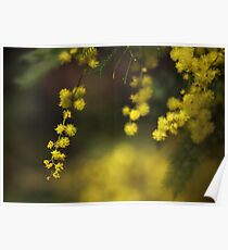 Spring Wattle Poster
