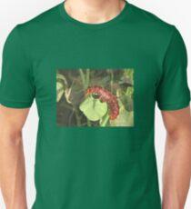 Pipevine Swallowtail Butterfly Caterpillar Unisex T-Shirt