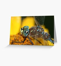 Dragonfly Macro  Greeting Card