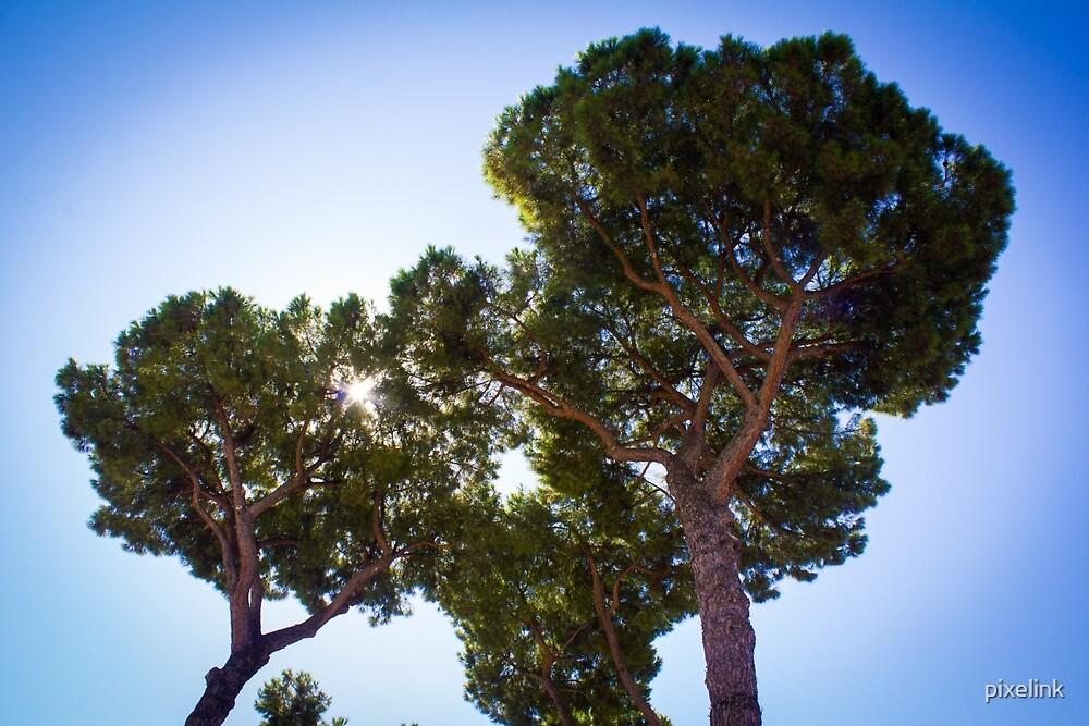Backlit trees by pixelink