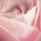 Fleur [Print and iPhone / iPod Case] by Didi Bingham