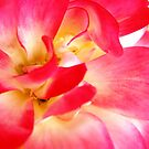 Touch of Pink by marinar