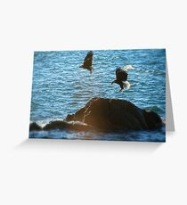 Pair of Eagles #1 Greeting Card