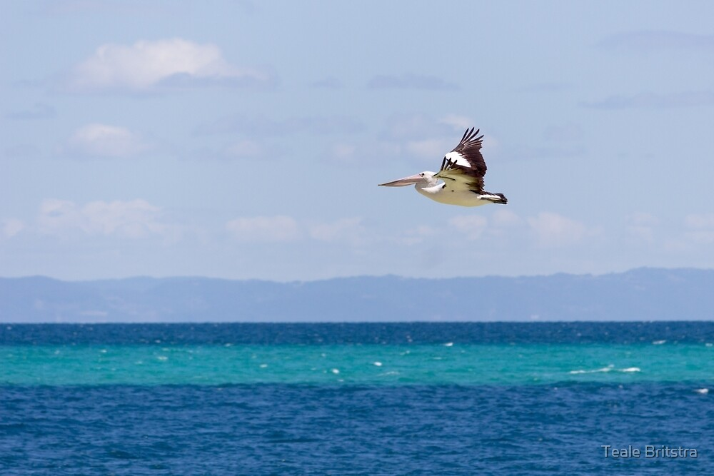 Australian Pelican over Water by Teale Britstra