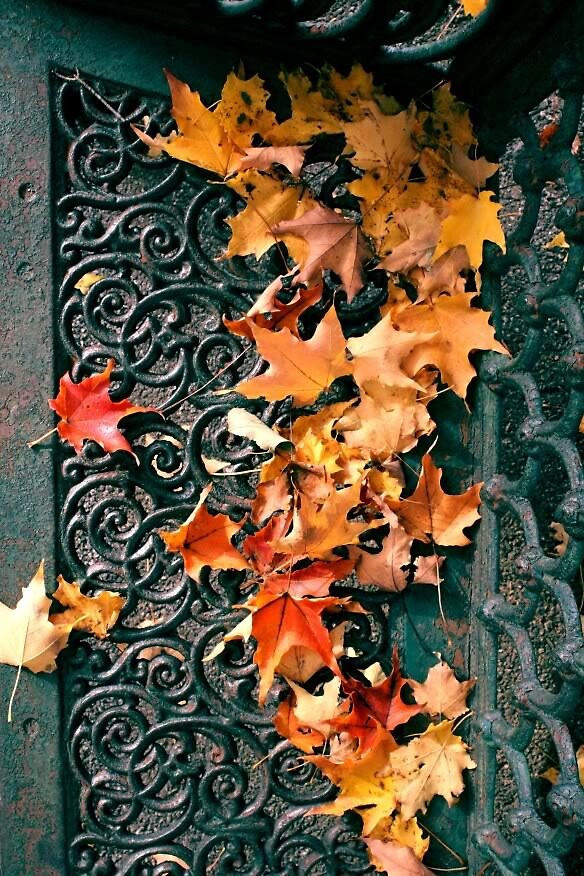 Fall Colors of New York by Kyle Jerichow