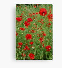 Poppy Field, France. Canvas Print