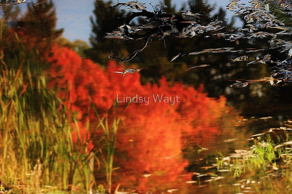 Autumn Reflection by Lindsy Wayt