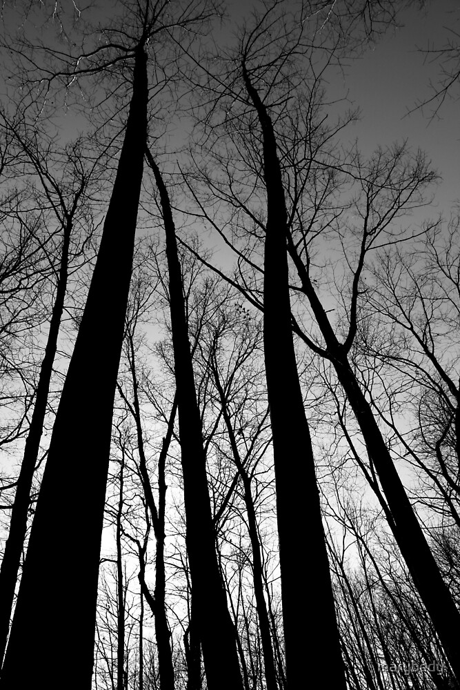 Winter Trees and Sun 3 BW by marybedy