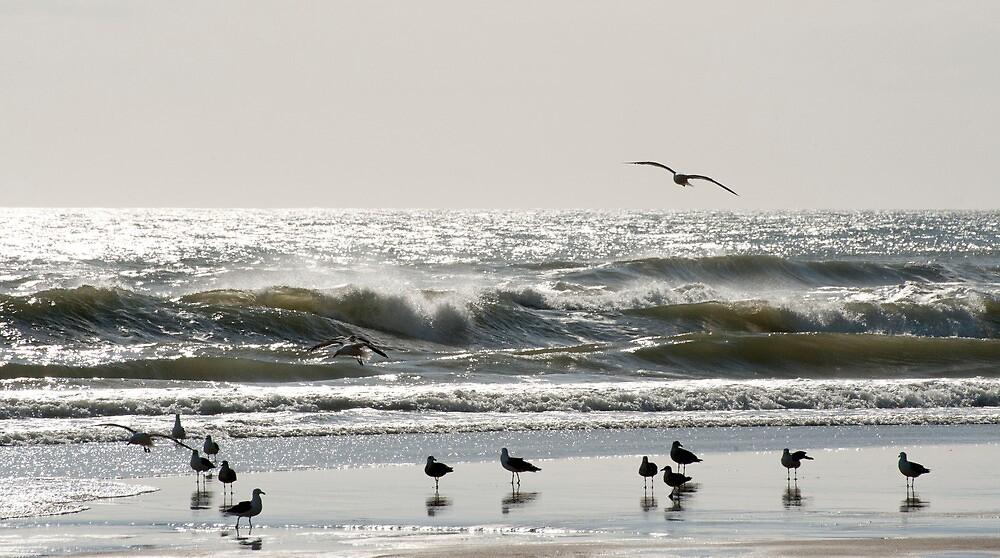 Early Birds - birds on the beach by Jenny Dean
