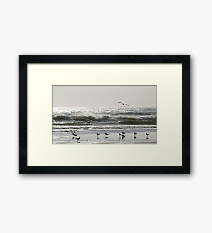 Early Birds - birds on the beach Framed Print
