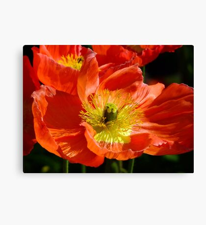 Poppy Fusion Canvas Print