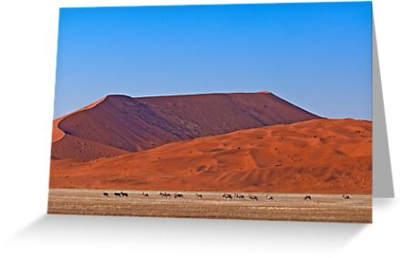 Life in the desert (II) by Konstantinos Arvanitopoulos