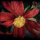 La Fleur Rouge by Christine Annas