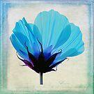 Fleur Bleue by Curtis  Sheppard