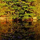 Reflections in the Water by Chris Goodwin