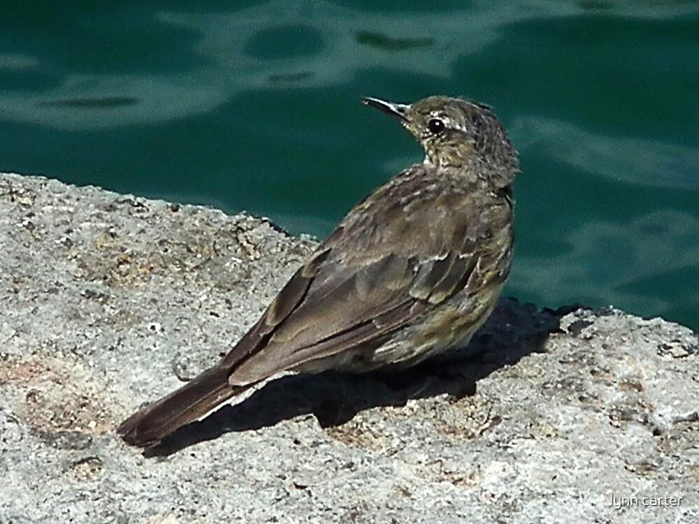 It's That Bird Again by lynn carter