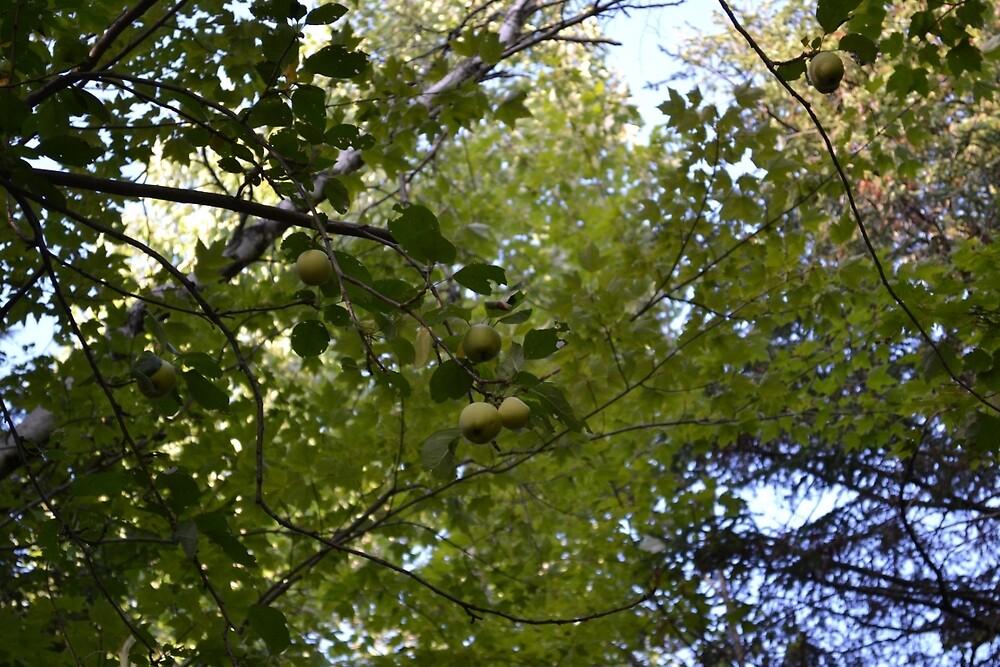 Green apple by Didi58