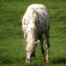 Morning Graze... by Jamie  Armbruster