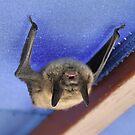 """Da Bat' by Scott Bricker"