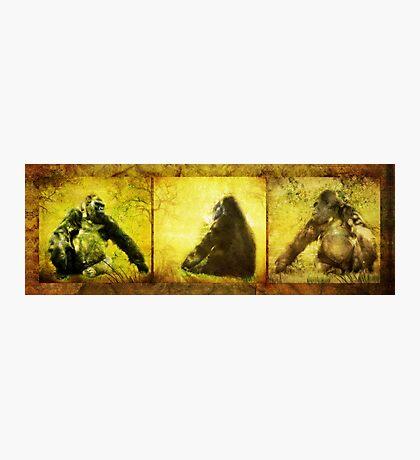 Gorilla Triptych (Views: 1807) Photographic Print
