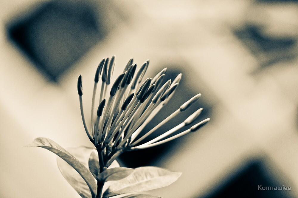 Needle as art... by Kornrawiee