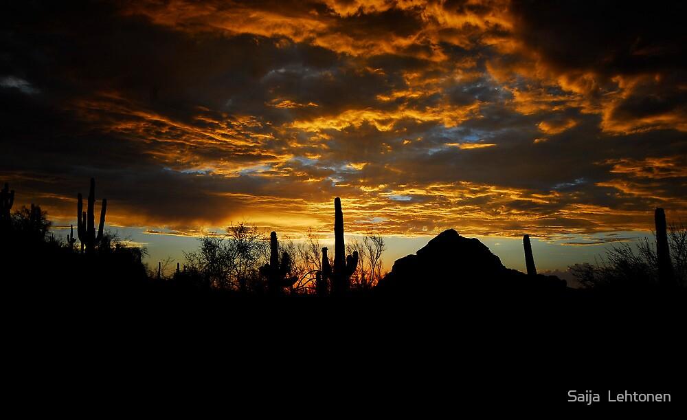 An Arizona Desert Sunset  by Saija  Lehtonen