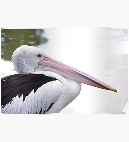 Pellie The Pelican Poster