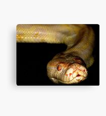 White Python - Up Close and Personal Canvas Print