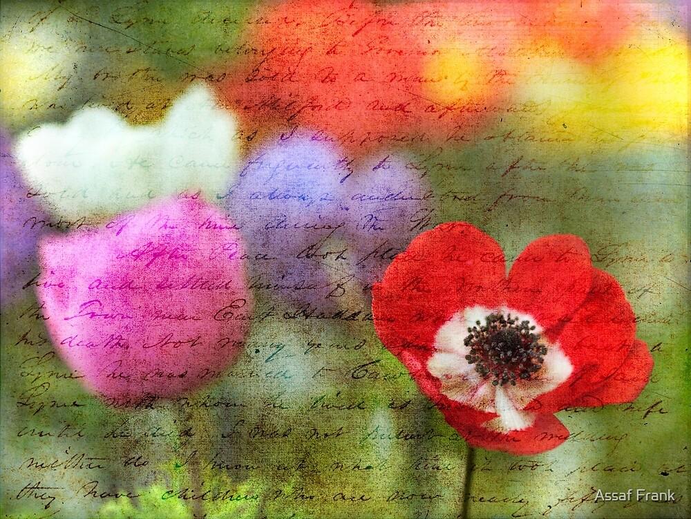 Vintage Anemone Flowers by Assaf Frank