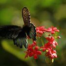 Flutterby by KatsEyePhoto