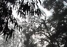 Trees in the Mist by Heidi Schwandt Garner