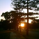 Sunset Floreat by Robert Phillips