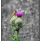 The Thistle by Kevin Meldrum
