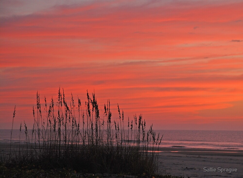 Sunrise and Sea Oats by Sallie Sprague
