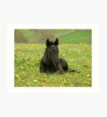 Peaceful foal at Littletree Stud Art Print