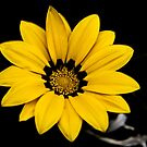 Stylized Yellow Flower by Jonathan Eggers