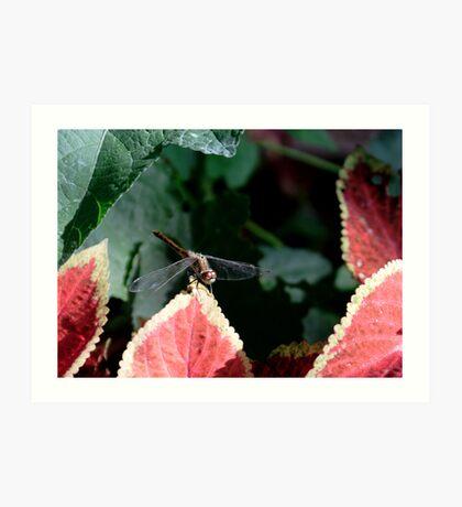 Dragonfly & Colius Art Print