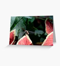 Dragonfly & Colius Greeting Card