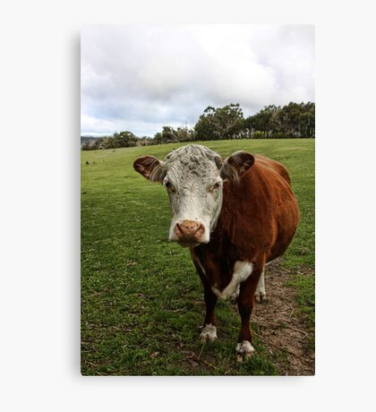 Outstanding In Their Field Canvas Print