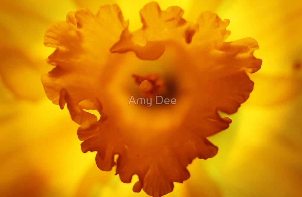 Heart Of Hope by Amy Dee