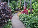 Garden Path by W E NIXON  PHOTOGRAPHY