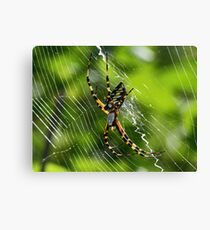 Black and yellow garden spider(orbweaver) Canvas Print