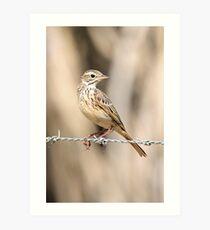 Little Grassbird Art Print