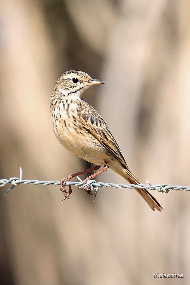 Little Grassbird by triciaoshea